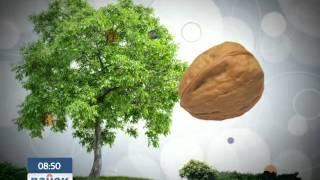 Орех - сложное дерево для садоводов