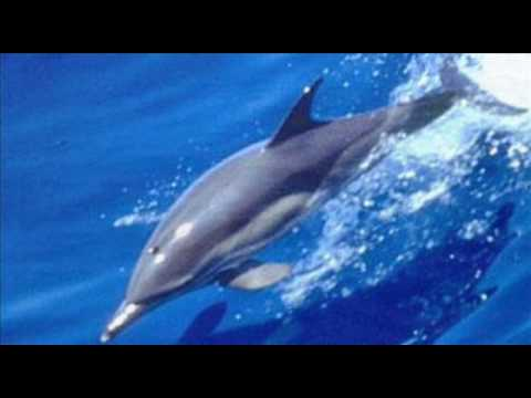 Stephen Schlaks BLUE DOLPHINS - YouTube