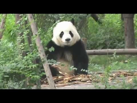 Travel to Tibet - wondersinasia.com