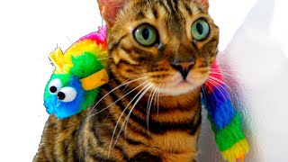 YouTube - Murka cat promises to be a good cat!