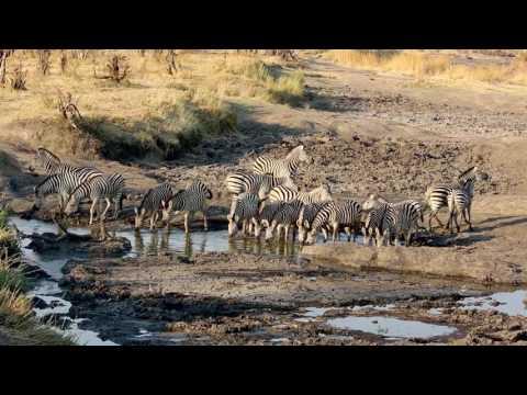 Hwange National Park Dry Season