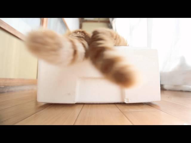 しっぽ Cat tail 2016#1