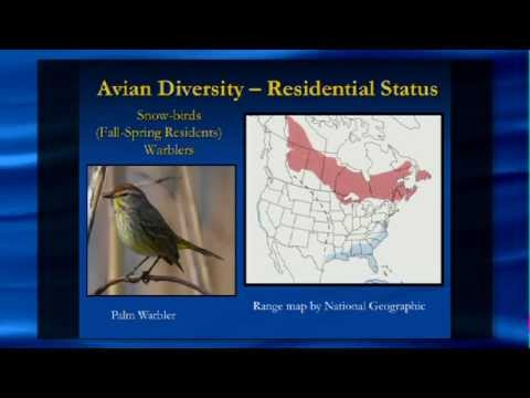 Greg BRAUN 04/16/14: Bird Diversity in the IRL