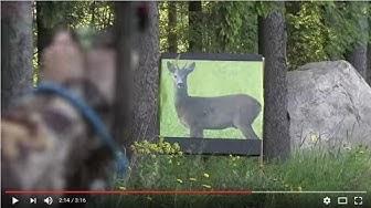Metsästysjousi - harjoittelu
