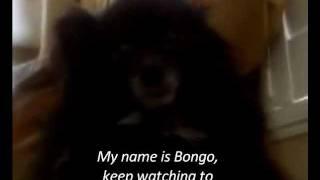 My Black Pomeranian. Thumbnail