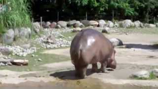 Le plus gros pet du monde - L