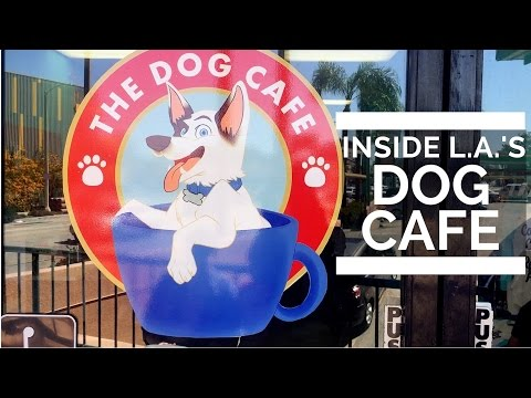 Inside America's First Dog Cafe in Los Angeles