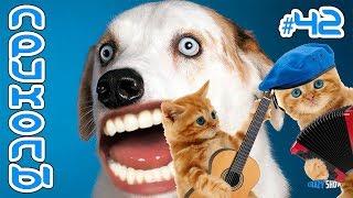 Приколы с котами и собаками 2019 Смешные коты и собаки 2019 Приколы с котами до слёз #42