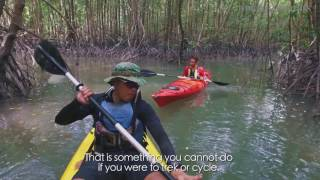 Living City: At work in a kayak through the mangroves of Pulau Ubin