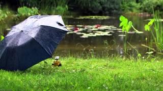 12Hrs Windy Rain on Umbrella - Sounds of Nature
