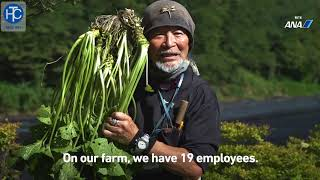 Wasabi | môi trường trồng cây wasabi (mù tạc) và thu hoạch | thcgroup.vn