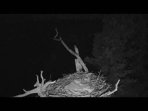 Audubon Osprey Nest Cam 03-19-2018 02:56:23 - 03:56:24