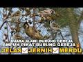Dijamin Burung Gereja Cepat Ngumpul Suara Pikat Burung Gereja Dan Masteran Burung Juara  Mp3 - Mp4 Download