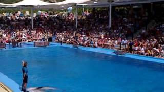 Шоу дельфинов. Майорка.