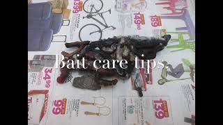 Bait preservation. Worms.