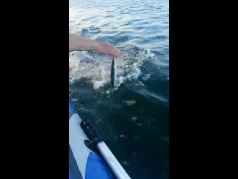 Amazing Thing Happened While Dingy Fishing In N Ireland.