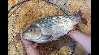 Домашняя рыба: 300 процентов привеса за 7 месяцев