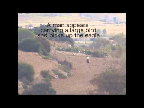 Booted Eagle shot and killed near Buskett