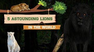 5 Most Unique Lions in the World! | ప్రపంచంలో 5 ఆసక్తికరమైన సింహాలు
