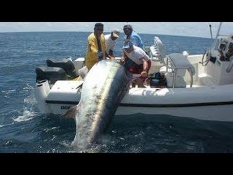 ловля тунца в океане видео