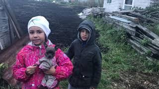 Маша и Иви в деревне( коровы, куры, цыплята, собака и кошка) Прикол с большой собачкой , пописала .