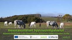 PÄMÄ-info:  Hevosavusteiset hyvinvointipalvelut