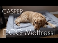 A Mattress...Engineered for DOGS??? - The Casper Dog Mattress - In-depth Review / Demo