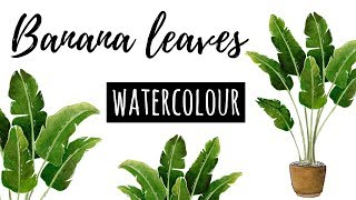 Tropical Leaves | Banana Plant | Watercolour illustration