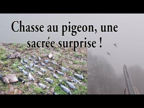Chasse Au Poste Pas Comme Les Autres !!! (pigeon, Oies) - F&S Chasse