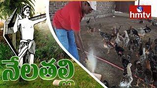 Mahabubnagar Farmer Earns High Profits From 'Natu Kodi' Cultivation   Nela Talli   HMTV