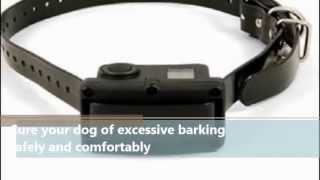 Sportdog Rechargeable Nobark 10r Bark Control Collar Review