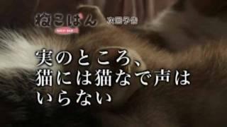 『ねこばん』第3回―実のところ、猫に猫なで声はいらない。 2010年10月ス...