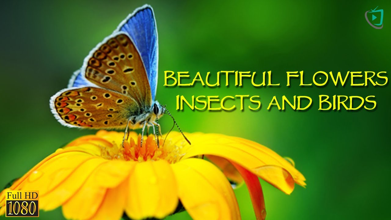 Beautiful Flowers, Insects, and Birds. Amazing Nature Video by Channel Home Video Media.