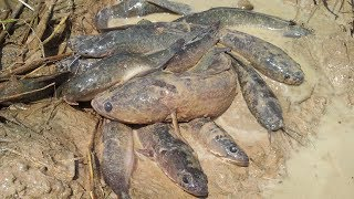 Wow! Amazing Smart Boy Fishing in Cambodia - How to Fishing - By Natural Life ( That working)