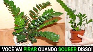 Coloque essa Planta Dentro do seu Banheiro Hoje!!!
