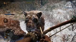 Far Cry Primal Jak poskromić / oswoić zwierzęta - Tygrysa Szablo-zębnego