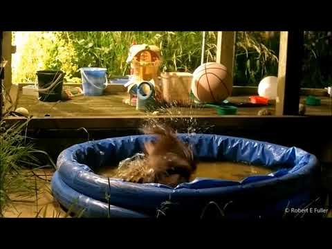 Owl has hoot - by cooling off in a children's paddling pool