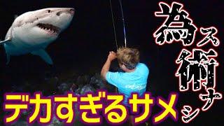 【サメ目撃】ビーチに現れた数百キロのサメを捕獲せよ!!【ビーチザメ #1】