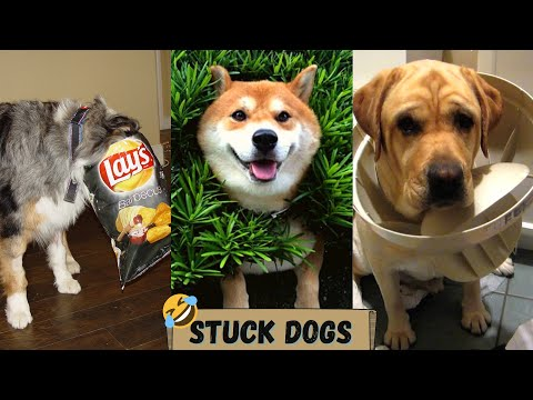Funny stuck dog compilation – funny animal video