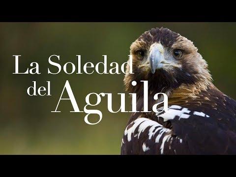 La soledad del águila -Reflexión 28 -César A. Fernández.