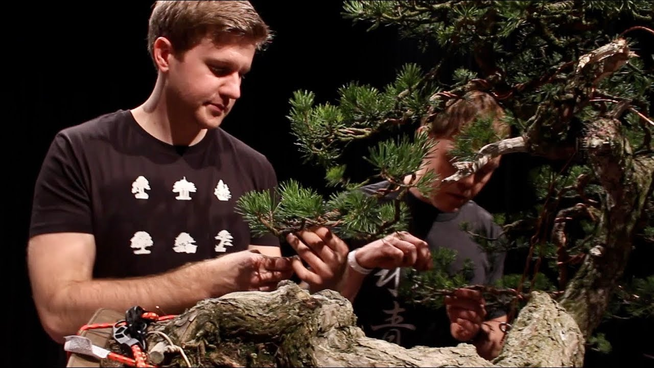 Bjorn Bjorholm Creates A Scots Pine Bonsai Youtube Wiring Demo