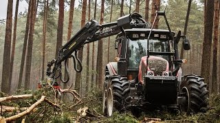Wycinka drzew - prace leśne Leszno i okolice
