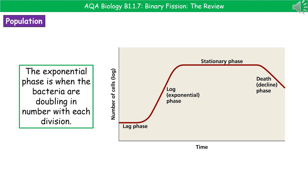 hight resolution of aqa biology b1 1 7 binary fission higher