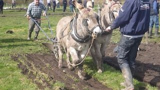 Ploughing with Donkeys / Jerusalem Jeeps.
