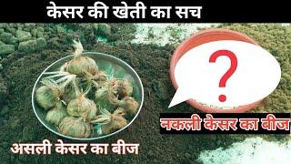 Saffron farming tips || केसर की खेती की हकीकत