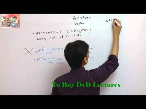 PART 1 EXCRETORY SYSTEM for AIPMT,BHU,AIIMS,WBJEE,CPMT,BIHAR PMT etc