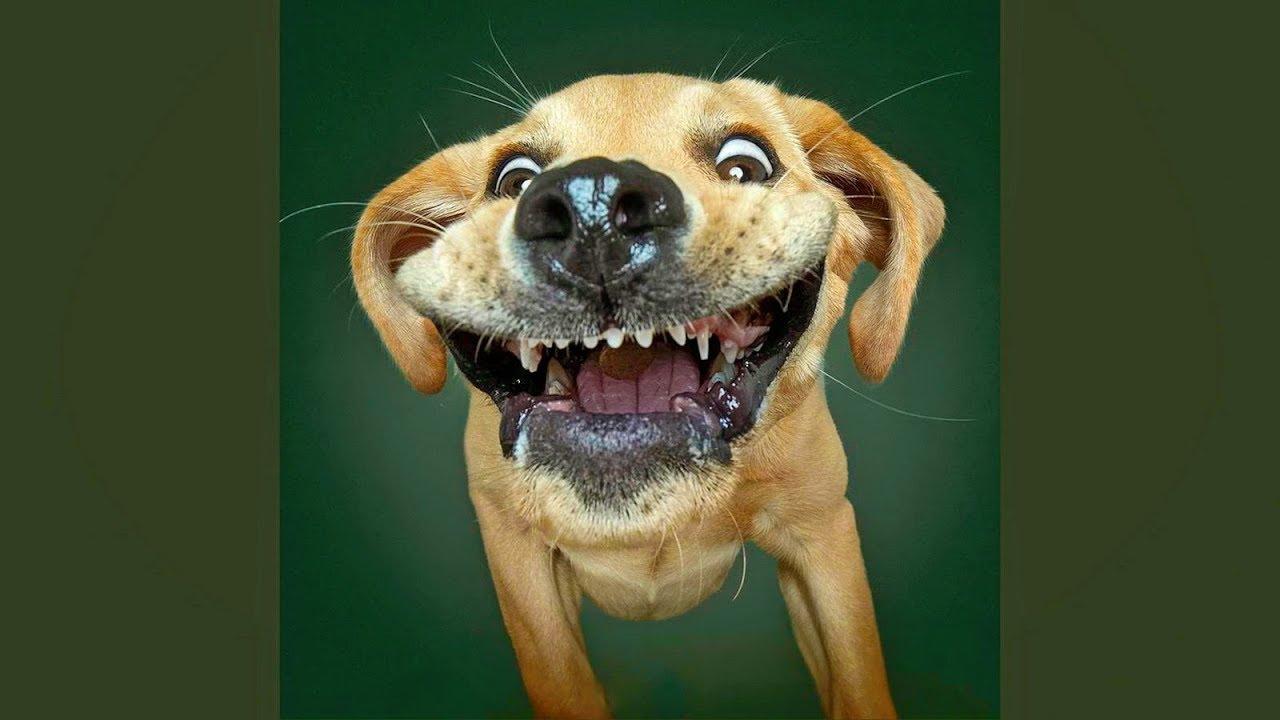 Открытки днем, картинки смех до слез про животных