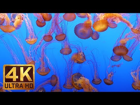 4K UHD Aquarium Life - Video for Relaxation | Relax Music for Sleep, Work & Study