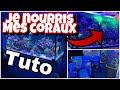 TUTO: COMMENT JE NOURRIS MES CORAUX ?