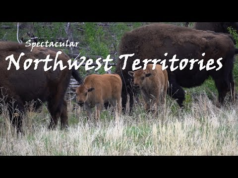 | Spectacular Northwest Territories 2017 | Travel Canada | Bear, Buffalo, and Cranes |
